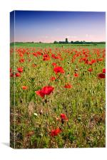 Poppy field in Norfolk, Canvas Print