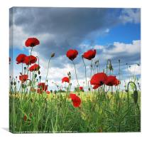 Yorkshire Poppies., Canvas Print