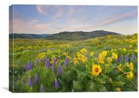 Meadow Of Spring , Canvas Print