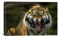 Eyes of the Tiger!, Canvas Print