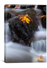 Autumn Above and Below, Canvas Print