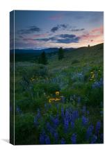 Sunset Meadow Trail, Canvas Print