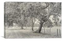 Trees, Fields And Fences, Canvas Print
