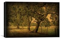 Trees, Fields and Fences 2, Canvas Print