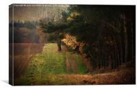Edge Of The Woods, Canvas Print