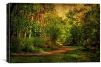 Holt Country Park 21, Canvas Print