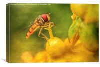 Hoverfly - 14, Canvas Print