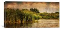 River Ant 98, Canvas Print