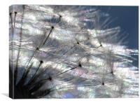 Dandy Abstract, Canvas Print