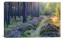 Woodland with heather at sunset, Canvas Print