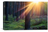 Sunset in the forest, Canvas Print