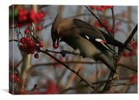 The Waxwing, Canvas Print