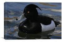 The Tufted Duck, Canvas Print