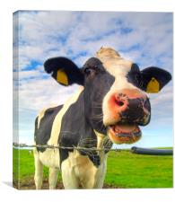 cow on pasture, Canvas Print