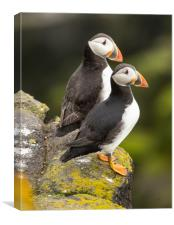 Pair of Puffins, Canvas Print