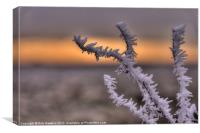 Frosty the Twig, Canvas Print