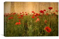 In Flanders Fields the poppies blow, Canvas Print