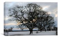 Trees in the snow, Canvas Print