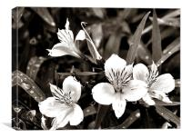 Black and white touch, Canvas Print