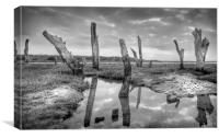 The Drowned Trees Of Thornham, Canvas Print