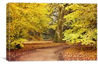 Autumn Walk at Westonbirt, Canvas Print