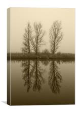 Misty Trees on the Norfolk Broads, Canvas Print