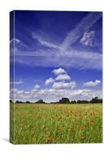Fields of Red and Skies of Blue 2, Canvas Print