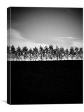 Forest, Canvas Print