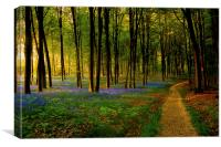 Bluebell woodland path and sunset, Canvas Print