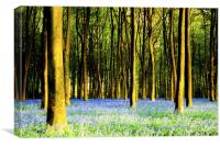 Bluebell sunset at Micheldever, Canvas Print