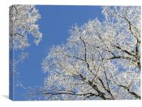 Frost Blossom Trees, Canvas Print
