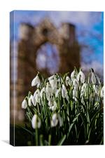 Walsingham Snowdrops, Canvas Print