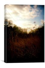 The Reeds, Canvas Print