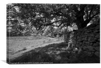 Common Ash tree over drystone wall., Canvas Print