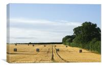 Evening light over round bales of straw in a recen, Canvas Print