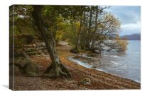 Exposed tree roots and waves on Ullswater near Poo, Canvas Print
