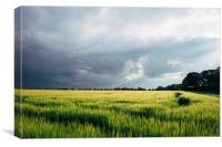 Field of barley against a stormy evening sky., Canvas Print