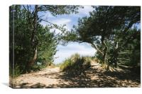 Sunlit woodland beside the beach at Wells-next-the, Canvas Print