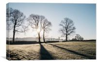 Sunrise behind trees on a frosty morning. Derbyshi, Canvas Print