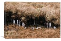 Frozen icicles among the peat and moorland grass. , Canvas Print