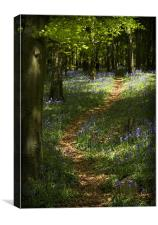 BLUEBELL WALK, Canvas Print