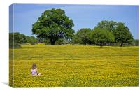 Girl in buttercup meadow, Canvas Print