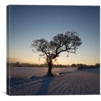 Tree in Winter, Canvas Print