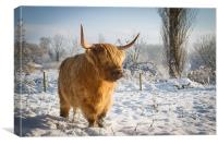 Highland Cow in the snow, Canvas Print