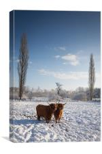 Highland Cows in snow, Canvas Print