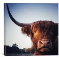 Highland Cow portrait, Canvas Print