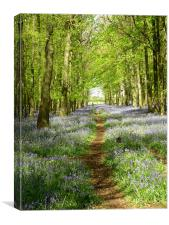 Bluebell woods at Ash Ridge, Canvas Print