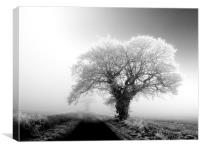 misty tree, Canvas Print