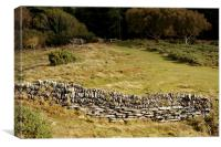 The Iron Age Enclosure on Hollerday Hill , Canvas Print