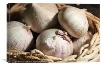 Garlic, Canvas Print